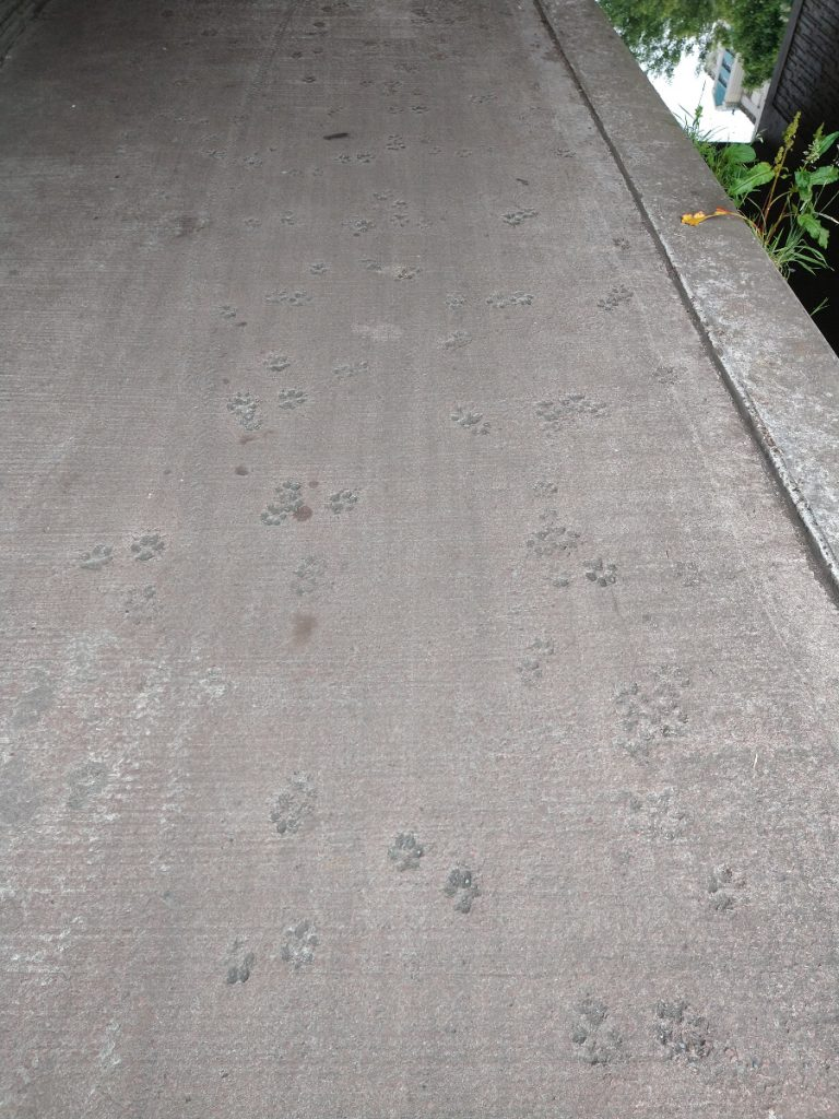 Paw prints in the concrete